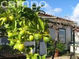 Costa Azul self catering holiday cottage - Alentejo vacation cottage in Portugal